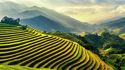 Rice 4k Terrace Fields Wallpapers Chai Nature
