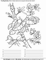 Coloring Pages True Asu Bugs Sparky Activity Askabiologist Edu Biologist Ask Activities Template sketch template