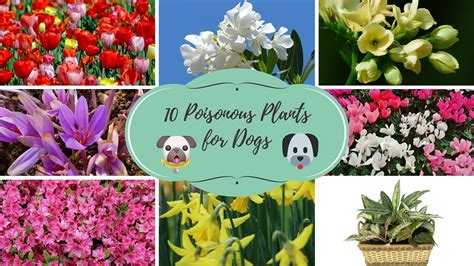 dogs poisonous plants
