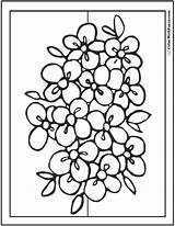 Coloring Flower Flowers Bouquet Printable Clipart Pdf Getdrawings Colouring Rose Sheets Bouquets Colorwithfuzzy Drawing Customize Personal Wild Books sketch template