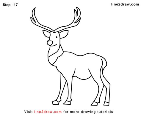 Whitetail Buck Pencil Drawings Sketch Coloring Page