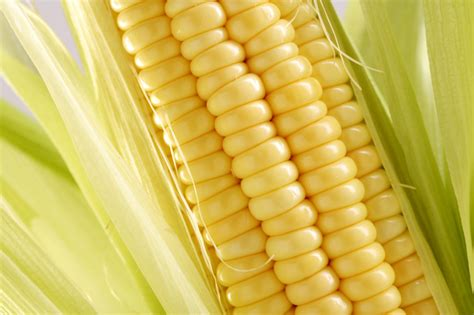 modified sweet corn monsanto enters fresh produce