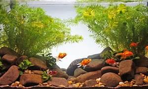 Goldfisch Haltung Im Teich : goldfisch steckbrief haltung wissenswertes ~ A.2002-acura-tl-radio.info Haus und Dekorationen
