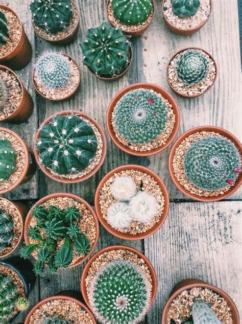Cactus Thailand   Cactus flower, Plant aesthetic, Cactus ...