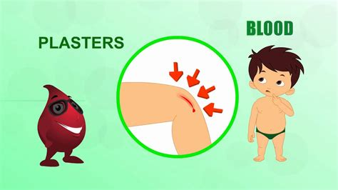 what color is blood inside the human blood human parts pre school animated