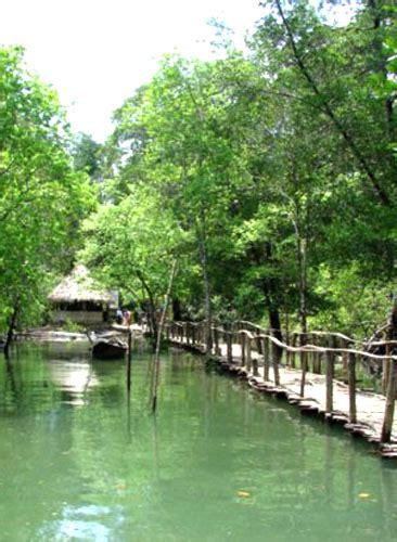 hutan payau cilacap wikipedia bahasa indonesia