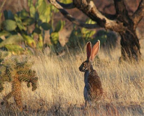 Habitats, Arizona And Cactus On Pinterest