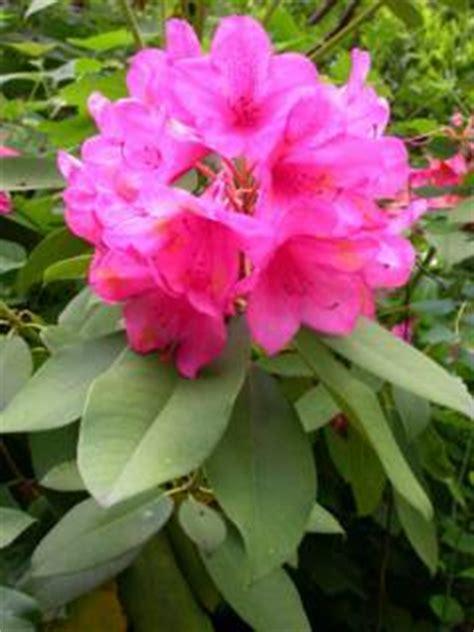 identify  washington state flower answers