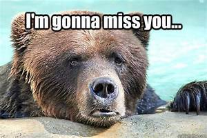 miss you bear MEMEs