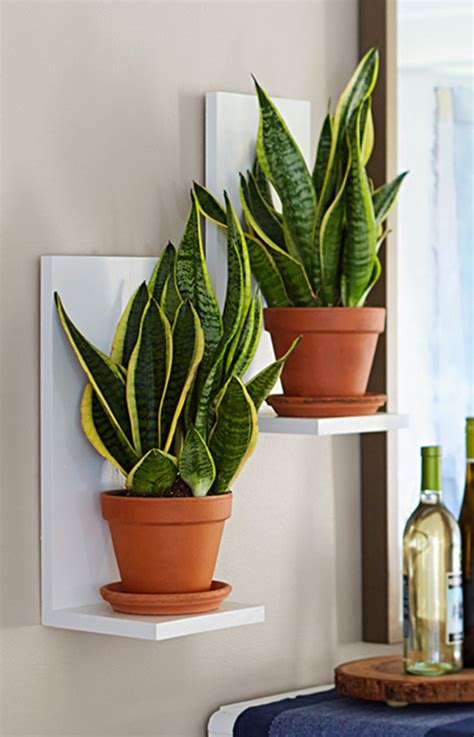 plant used as decoration 40 changing indoor plant decoration ideas