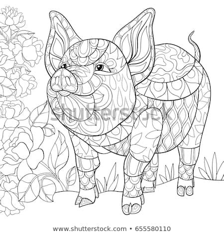 adult pig stock images royalty free images vectors