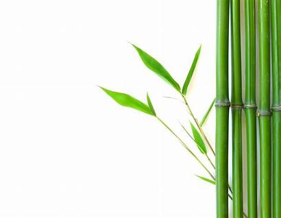 Bamboo Clipart Background Leaves Tree Border Plants