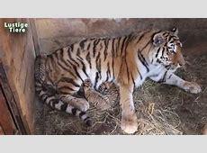 Nette BabyTiere in Zoo Compilation 2015 [NEU HD VIDEO