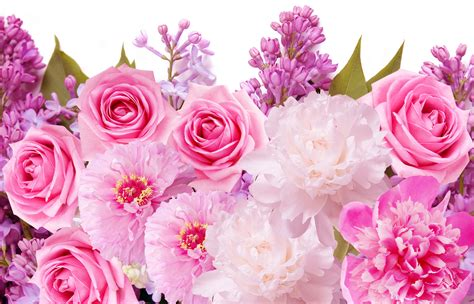 Pink Roses Background Pink Roses Pretty Wallpapers Images Hd Morewallpapers