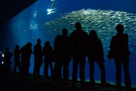 file interior monterey bay aquarium by vilay jpg wikimedia commons
