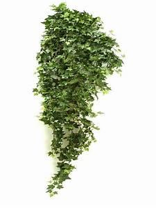 Hängende Pflanzen Für Draußen : seidenpflanze hedera h ngende pflanze gr n 125mm ~ Sanjose-hotels-ca.com Haus und Dekorationen