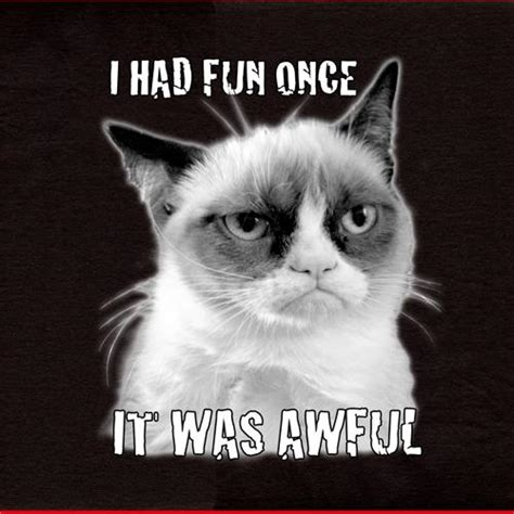Grumpy Cat I Had Fun Once  Funny Collection World