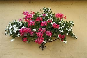 Mur De Fleurs : pot de fleurs classique de planteur sur un mur de briques photo stock image du centrale ~ Farleysfitness.com Idées de Décoration