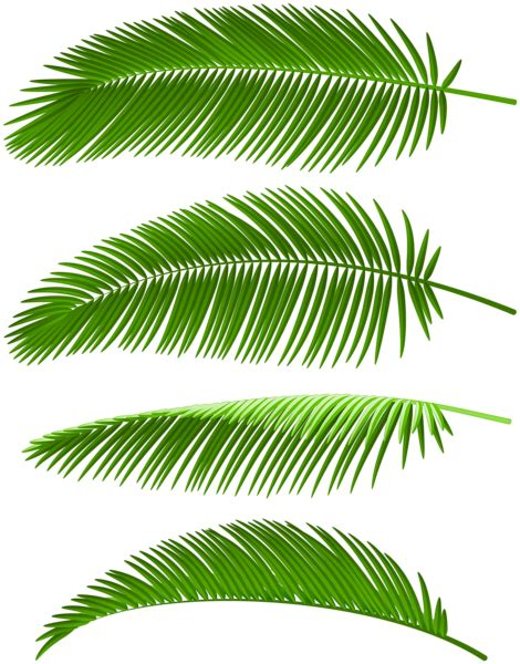 palm leaves set png clip art image gallery yopriceville high