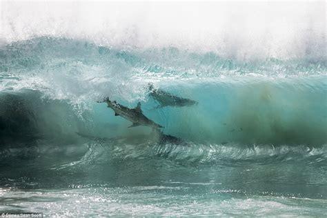 Sharks swim dangerously close to children off coast of WA ...