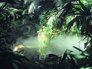 Funny Picture Clip: Funny pictures: The amazon rainforest ...