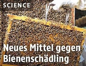 Mittel Gegen Bienen : eu stuft pestizide als gefahr f r bienen ein news ~ Frokenaadalensverden.com Haus und Dekorationen
