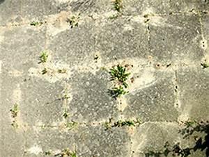 Ameisen Im Gemüsebeet : was hilft gegen ameisen im garten kleinster mobiler ~ Whattoseeinmadrid.com Haus und Dekorationen