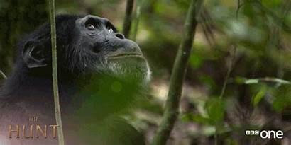 Bbc Monkey Gifs Animals Wildlife Funny Monkeys