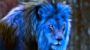ShukerNature: BLUE LIONS OF AFRICA AND ASIA