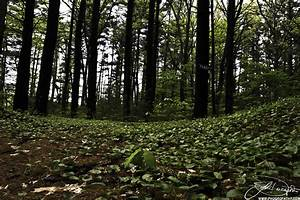 the forest floor sunday critique phogropathyphogropathy With forrest flooring