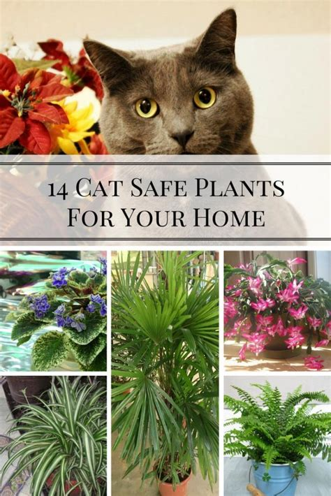 low light indoor plants safe for cats house plants low light cat safe 28 images low light