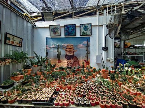 ร้าน Cactus Library (แคคตัส ไลบราลี่) - รีวิวร้านอาหาร - Wongnai