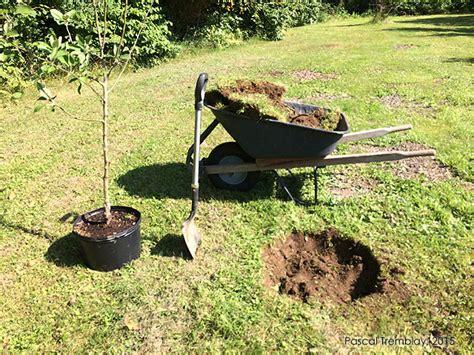 le bureau restaurant villefranche sur saone planter un pommier en pot 28 images pommier planter