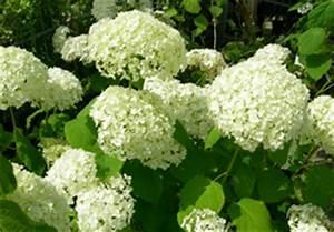 Kübelpflanzen Für Schatten : gestalten mit k belpflanzen der obi ratgeber zeigt wie es geht ~ Eleganceandgraceweddings.com Haus und Dekorationen