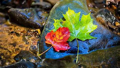 8k Ultra Nature Leaves Wallpapers Autumn Leaf
