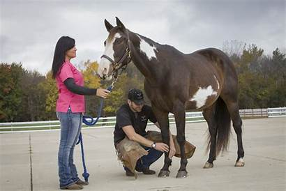 Lameness Horse Foot Equine Fouts Care