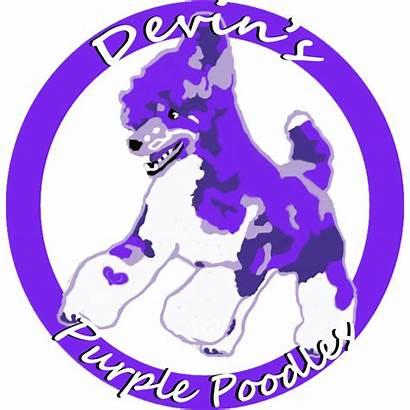 Purple Poodles Devin Poodle Standard