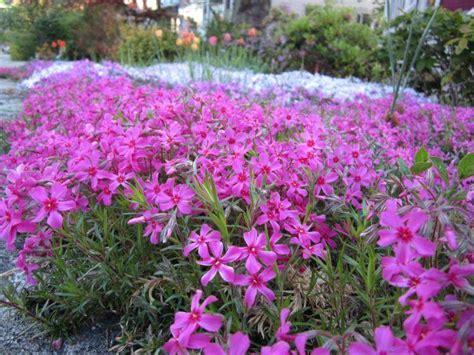 plante pour jardiniere exterieur plein soleil plante plein soleil 12 esp 232 ces 224 fleurs jolies et rustiques