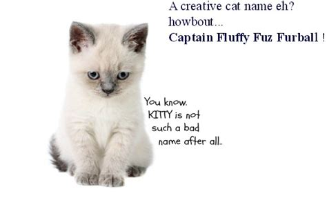 kitten names 15 white cat names you can t find anywhere else