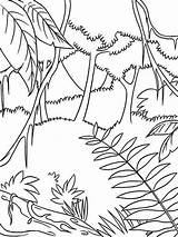 Rainforest Coloring Forest Jungle Pages Drawing Awesome Tropical Tropic Printable Simple Preschoolers Easy Draw Animals Drawings Sheets Nature Plants Sketch sketch template