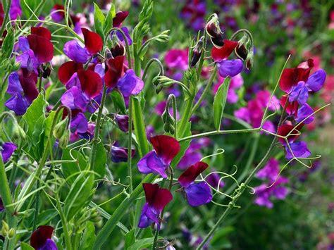 fait maison cuisine 5 fleurs de printemps faciles à cultiver