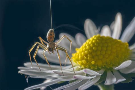 spiders  atmospheric electricity  fly hundreds