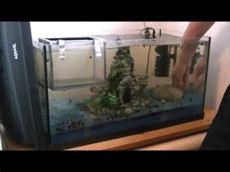 Aquarium  Dekoration Verstellen Youtube