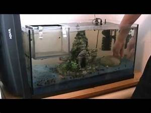 Aquarium Deko Ideen : aquarium dekoration verstellen youtube ~ Lizthompson.info Haus und Dekorationen