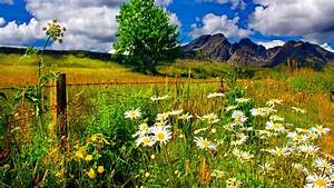 Spring Landscape, Chamomile Flowers And Green Grass ...