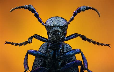 incredible high quality macro photography  insects