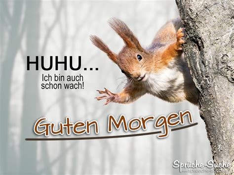 Guten Morgen Sprüche Mit Eichhörnchen Sprüchesuche
