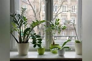 Plantes Pour Chambre : peut on mettre une plante verte dans une chambre delicatesse beaute ~ Melissatoandfro.com Idées de Décoration