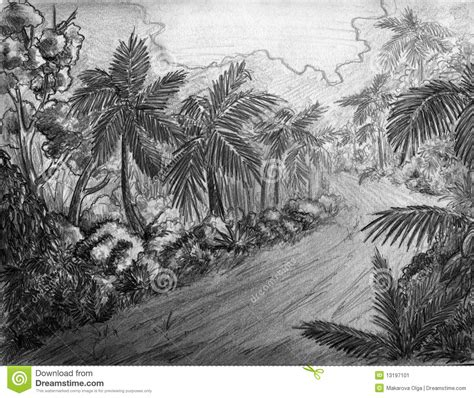 jungle road stock illustration illustration  drawing