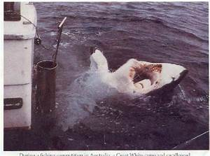 About Great White Shark Attacks Victim stories photo ...